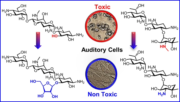 Chemical Modifications Reduce Auditory Cell Damage Induced by Aminoglycoside Antibiotics