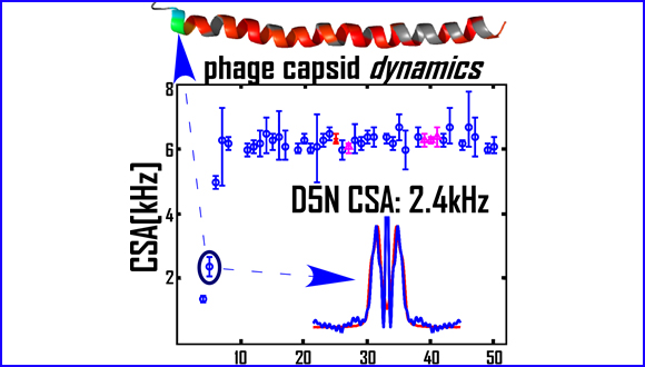 Dynamics and Rigidity of an Intact Filamentous Bacteriophage Virus Probed by Magic Angle Spinning NMR