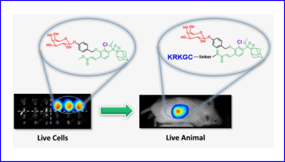 Ortho-Chlorination of phenoxy 1,2-dioxetane yields superior chemiluminescence probes for in vitro and in vivo imaging
