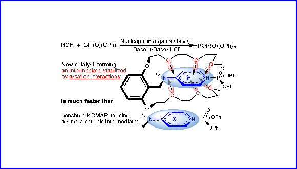 Phosphorylation Organocatalysts Highly Active by Design