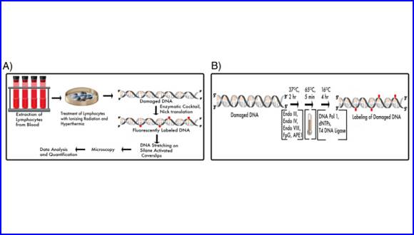 Quantifying DNA damage induced by ionizing radiation and hyperthermia using single DNA molecule imaging