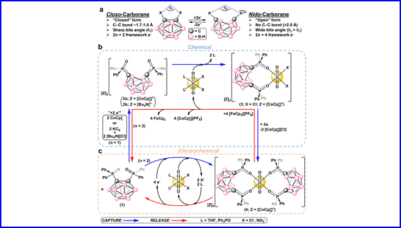 Redox-switchable carboranes for uranium capture and release